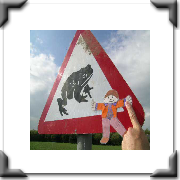 Careful! Toad crossing in Wales