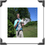 Dale Hubert, creator of the Flat Stanley Project with a red-tail hawk
